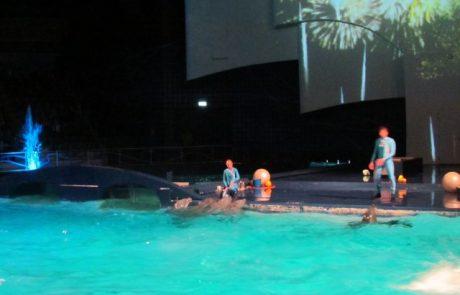 ההרשמה ללימודי הידרותרפיה ושחייה שיקומית של המכללה האזורית צפת בעיצומה