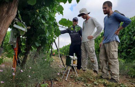 מה האתגרים בגידול גפן וייצור יין ומהם הפתרונות האקדמיים מחקריים המתאימים